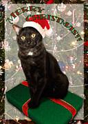 Christmas Cat Print by Adam Romanowicz