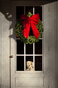 Red Bow Framed Prints - Christmas - Clinton NJ - Christmas puppy Framed Print by Mike Savad