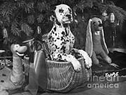 M E Browning - Christmas Dalmatian