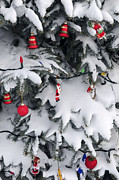 Hang Photos - Christmas decorations on snowy tree by Elena Elisseeva