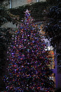 Holiday Prints - Christmas Display - US Botanic Garden - 011357 Print by DC Photographer