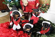 Christmas Dogs Art - Christmas Doggies by Christian Lagereek