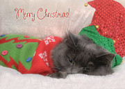 Kitty Cat Photo Prints - Christmas Elf Cat Print by Joann Vitali