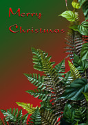 Assorted Digital Art Posters - Christmas Ferns Poster by Carolyn Marshall