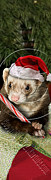 Ferret Digital Art - Christmas Ferret # 394 by Jeanette K