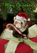 Ferret Digital Art - Christmas Ferret by Jeanette K