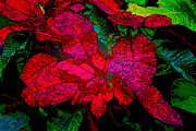 Jon Burch Photography - Christmas Flower