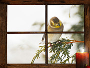Kelly Nelson - Christmas Goldfinch.