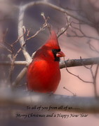Travis Truelove Photography Prints - Christmas Greetings - Cardinal Print by Travis Truelove