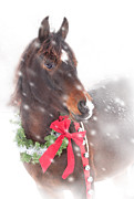 Sari ONeal - Christmas Horse in Snow