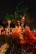 Palmetto Plants Photos - Christmas in the Sand by Elvis Vaughn
