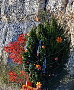 Packages Posters - Christmas Juniper and Sumac Poster by Linda Phelps