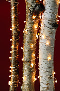 Red Background Prints - Christmas lights on birch branches Print by Elena Elisseeva