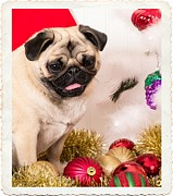 Pet Pug Art - Christmas Morning by Edward Fielding