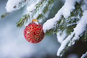 Pine Tree Prints - Christmas Ornament Print by Diane Diederich