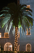 Christmas Holiday Scenery Prints - Christmas Palm Print by Kenneth Albin