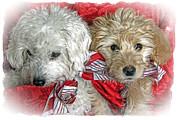 Christmas Puppy Print by Bob Hislop
