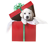 On White Posters - Christmas Puppy Poster by Diane Diederich