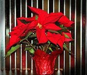 Cynthia Guinn - Christmas Red Poinsettia