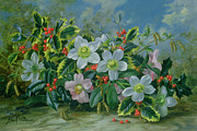 Christmas Flower Paintings - Christmas Roses and Holly by Albert Williams