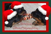 Christmas Dogs Digital Art Prints - Christmas Rottweilers A Time Of Joyous Giving  Print by Tracey Harrington-Simpson