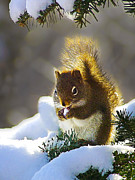 Photomanipulation Photo Posters - Christmas Squirrel Poster by ABeautifulSky  Photography