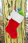 Stuffers Prints - Christmas stocking on cactus Print by Joe Belanger