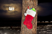 Stuffers Prints - Christmas stocking on pine tree Print by Joe Belanger