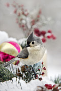 Christmas Holiday Scenery Prints - Christmas Titmouse Print by Christina Rollo