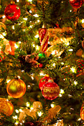 Bows Photos - Christmas tree background by Elena Elisseeva