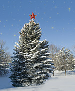 Winter Wonderland Photos - Christmas Tree by Juli Scalzi
