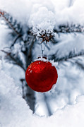 Christmas Tree Photos - Christmas Tree by Joana Kruse