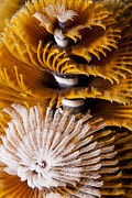 J Gregory Sherman - Christmas Tree Worms