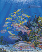 Parrotfish Painting Framed Prints - Chum line Re0013 Framed Print by Carey Chen