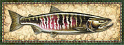 Jon Q Wright Framed Prints - Chum Salmon Spawning Pahse Framed Print by Jon Q Wright