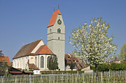 Baptist Photos - Church and blooming apple tree by Matthias Hauser