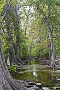 Oak Creek Photo Originals - Cibolo Creek - 2 by Paul Riedinger