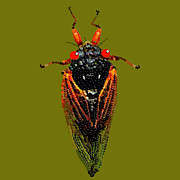 Cicada In Green Print by R  Allen Swezey
