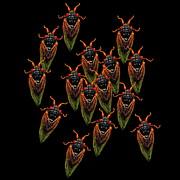 Cicadas Print by R  Allen Swezey