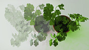 Salad Mixed Media Prints - Cilantro Fade-In Print by Ally Witt