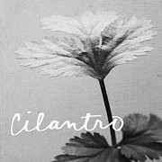 Black And White Photography Mixed Media - Cilantro by Linda Woods