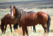 Melody Perez - Cimmaron Stallion