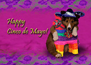Wildlife Celebration Digital Art - Cinco de Mayo Shetland Sheepdog by Jeanette K