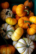 Farm Stand Photo Prints - Cinderella Pumpkin Pile Print by Kerri Mortenson