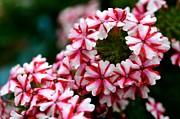 Corinne Rhode - Circle of Blooms
