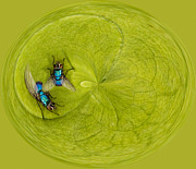 Creative Manipulation Photo Prints - Circle of flies Print by Jean Noren