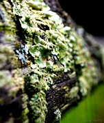 Lichen Pictures Prints - Circle of Life Print by Deborah Fay
