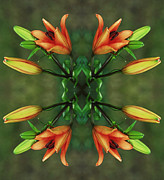 Mandala Photos - Circle of Life by Inspired Nature Photography By Shelley Myke