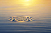 Water Drop Prints - Circles at Sunrise Print by Tim Gainey