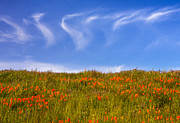 Marc Crumpler - Cirrus Clouds Above...